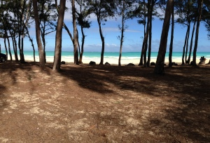 Looking through the Ironwood trees at the beach and ocean.