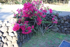 St. Joseph's Flowers
