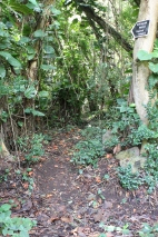 The start of the trail in the woods to the Heiau.