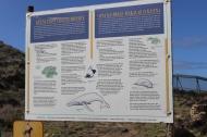 Kaena Point Info