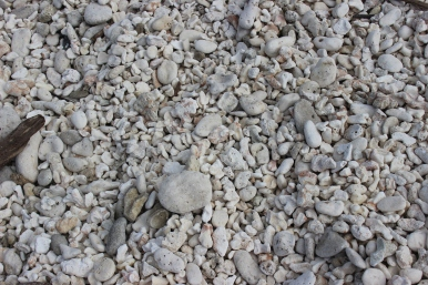Cool picture of all the coral washed up.
