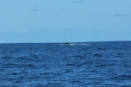 Whale Watching 4