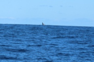Whale Watching 9