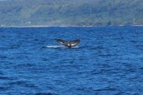 Whale Watching 12