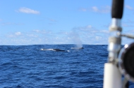 Whale Watching 19