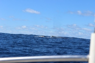 Whale Watching 20