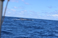 Whale Watching 21