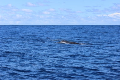 Whale Watching 22