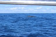 Whale Watching 23