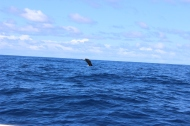 Whale Watching 25