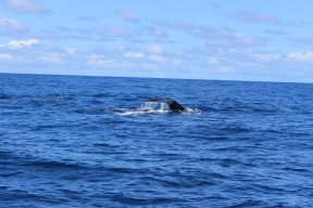 Whale Watching 26