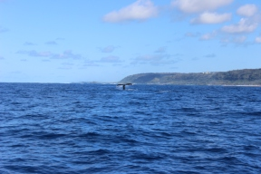 Whale Watching 27
