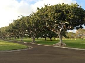 Unique Trees