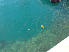 Lots of Fish!