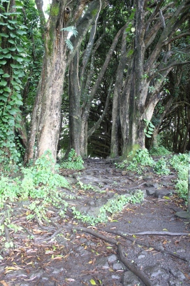 Path to Banyan Tree