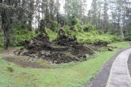 Lava Tree State Park 7