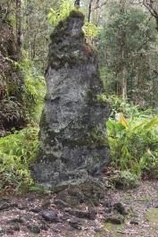 Lava Tree State Park 11