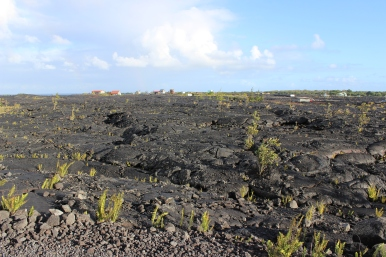 Houses rebuilt on the lava field