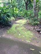 Mossy path in one of the botanical gardens.