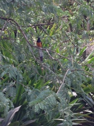 This bird was singing the prettiest song :)