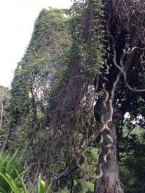 This wall of moss and vines.