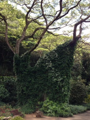 Wall of vines between two trees.