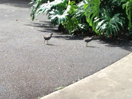 Birds with green legs!