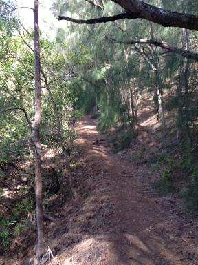 Start of the pine trees
