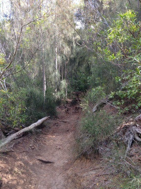 The trees made a canopy over the trail.