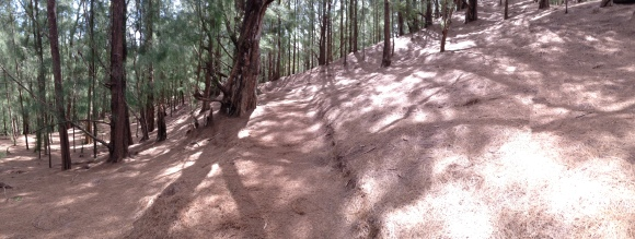 This area was so open...with a blanket of pine needles on the ground.