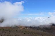 Haleakalā Horseback Ride 13
