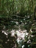 Kapa`ele`ele Trail 9