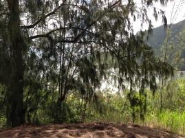 Kapa`ele`ele Trail 10