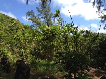 Kapa`ele`ele Trail 12