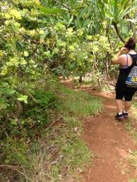 Kapa`ele`ele Trail 17