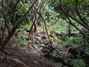 Kapa`ele`ele Trail 18
