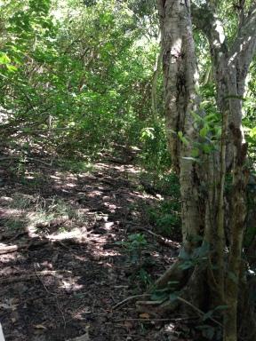 Kapa`ele`ele Trail 3