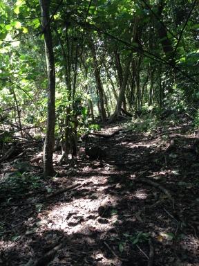 Kapa`ele`ele Trail 4
