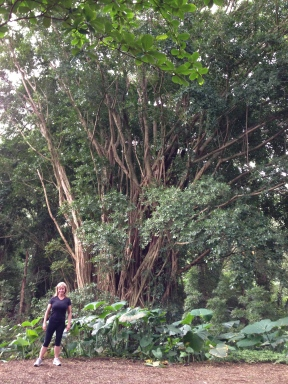 Mom and the giant Banyan tree at the beginning of Manoa Falls.