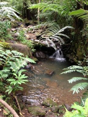 Manoa Falls 2