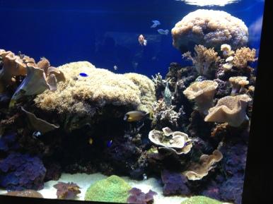 Waikiki Aquarium 1