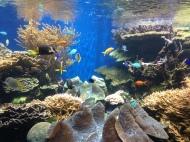 Waikiki Aquarium 2