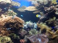 Waikiki Aquarium 3