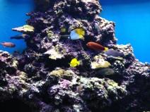 Waikiki Aquarium 10