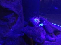 Waikiki Aquarium 12