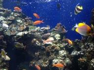 Waikiki Aquarium 13