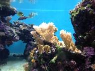 Waikiki Aquarium 14