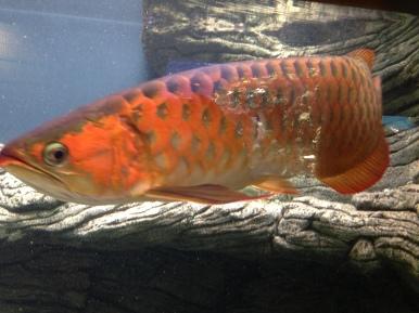 Waikiki Aquarium 16