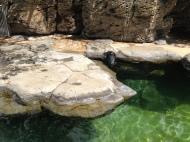 Hawaiian monk seal.