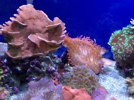 Waikiki Aquarium 20